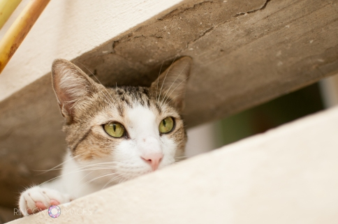 Gatitio_pet_portrait_photography-3