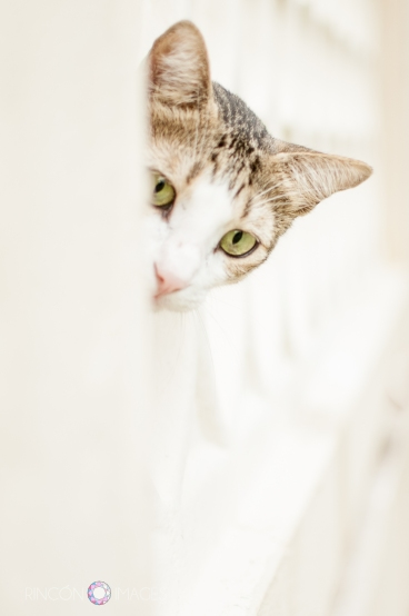 Cats make purrrfect subjects for practicing portrait photography.
