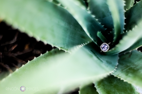 I love using natural elements when doing wedding photography. The rich lush green color of this aloe plant really makes the purple hues in the amethyst ring pop. Photograph by Rincon Images wedding photographer Puerto Rico.